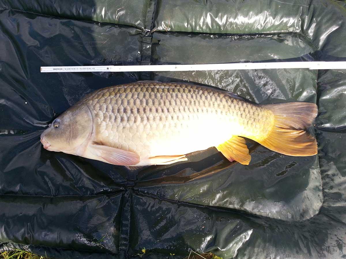 Abhakmatte angeln wofür