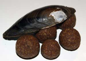 Boilies mit Lachs und Muschelmehl
